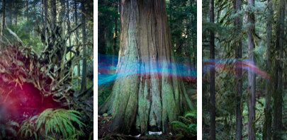 Photo: of an art installation called Forest Apparitions
